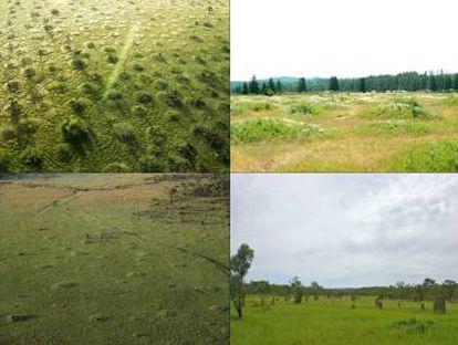 Los investigadores aplicaron su modelo a otros patrones regulares de vegetación. Arriba, murundus de Brasil y mimas en EE UU. Abajo, termiteros en Kenia y Australia.