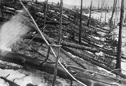 Árboles caídos en la región siberiana del río Tunguska, tras la explosión. Esta foto fue tomada en 1929.