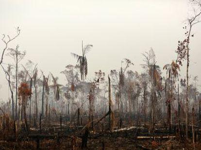 La flexibilización de los controles ambientales con la llegada del actual Gobierno ha acelerado la pérdida de vegetación en la selva