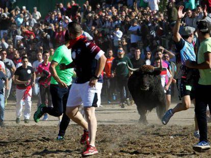 Festejo del Toro de la Vega en 2017 en Tordesillas. En vídeo, el Toro de la Vega visto desde el objetivo de dos fotógrafos de EL PAÍS.
