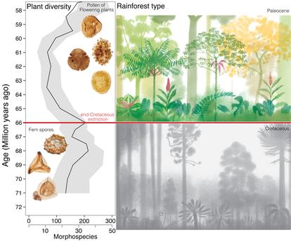 En este gráfico los autores muestran la composición del bosque tropical  antes y después de la caída del asteroide.