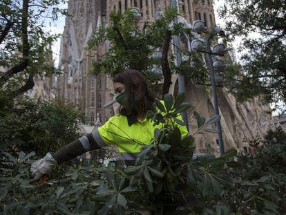 Una operaria de parques y jardines recortando vegetación junto a la Sagrada Familia