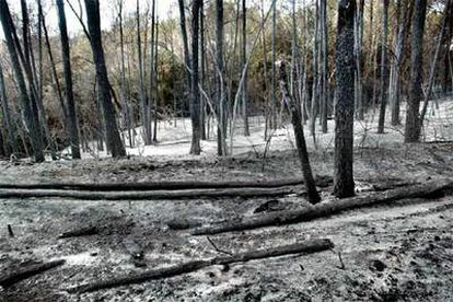 Bosque calcinado en Navata.