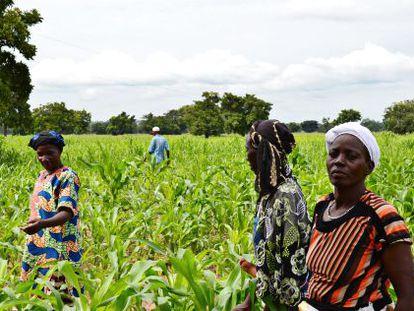 Un grupo de mujeres arranca hierbas en Houndé, Burkina Faso.