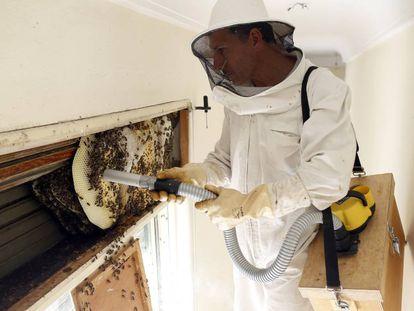 Un apicultor aspira abejas de una colmena sin causar su muerte.