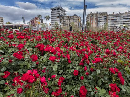 Jardines de la plaza Lesseps de Barcelona, donde las rosas han crecido sin cuidados desde el inicio del confinamiento por el Coronavirus