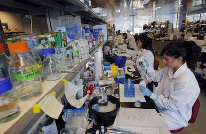 Científicas en el Centro Nacional de Investigaciones Cardiovasculares.