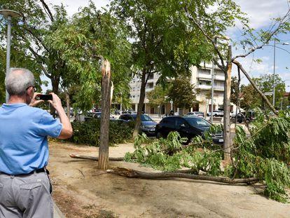 Árboles derribados por los fuertes vientos en el barrio de Balafia en Lleida.