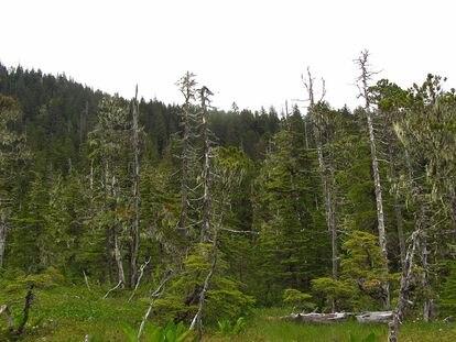 Bosque boreal del Parque Nacional Glacier Bay de Alaska, EE UU.