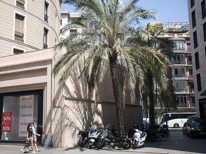Las dos enormes palmeras de la calle Gravina de Barcelona, restos de un antiguo patio.
