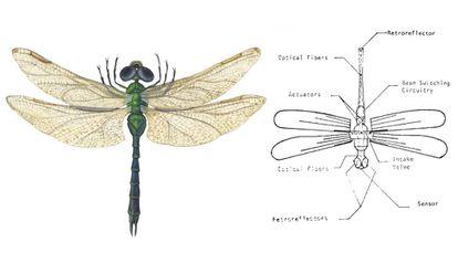 Libélula común e insectocóptero inspirado en ella