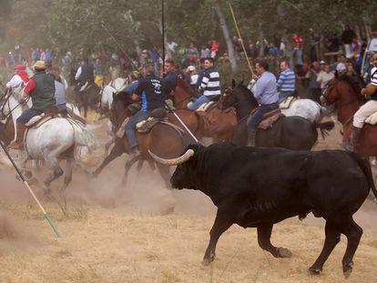 Celebración del Toro de la Vega en Tordesillas.