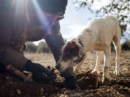 Truficultor con su perro «Monte».