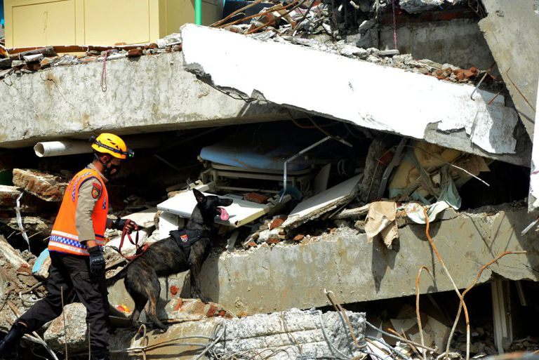 A police officer searches for victims with a K9 unit sniffer dog among the ruins of a hospital building that collapsed after an earthquake in Mamuju, West Sulawesi province, Indonesia.