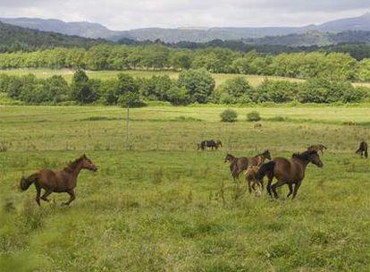 Caballos en el valle de Ultzama, lugar privilegiado para la cría caballar por sus praderas y la calidad de su hierba.