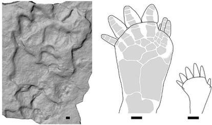 Icnitas de tetrápodos de hace 395 millones de años halladas en una antigua cantera de Polonia.