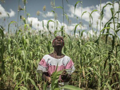 Pascaline Sawadogo, de 59 años, pertenece a una familia agricultora del centro de Burkina Faso (África occidental). El cambio climático ha cambiado los patrones de lluvia y pone en riesgo su cosecha.