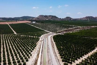 Explotaciones agrícolas a ambos lados del canal de trasvase Tajo-Segura en Alicante, el pasado septiembre.