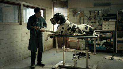 Marcello Fonte, en 'Dogman'.
