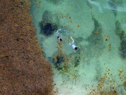 Turistas nadan en la playa de Xcalacoco afectada por el sargazo.