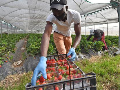 Un inmigrante, el miércoles en un invernadero cerca de Nápoles.