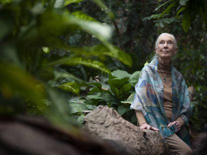 Jane Goodall, ayer en el bosque inundado de CosmoCaixa.