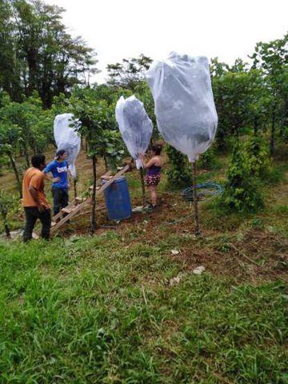 Varios trabajadores dedicados a la producción de gusanos.