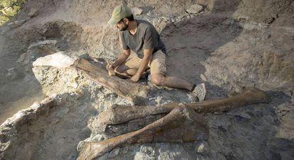 Una imagen de los huesos encontrados junto al paleontólogo Fernando Escaso.