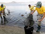 Municipal workers try to clean the beach of dead fish which continue to appear for the fourth day in La Manga del Mar Menor, Murcia, Spain, August 21, 2021. REUTERS/Eva Manez NO RESALES. NO ARCHIVES