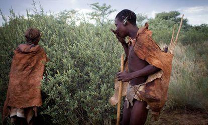 Tata y Tshamiie recolectan frutos comestibles de un arbusto.