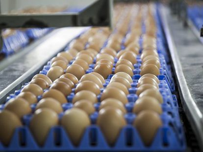Un huevo grande contiene 185 mg de colesterol.