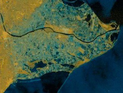 El mar se ha tragado más de 3.000 hectáreas de arrozales. El oleaje arroja al paseo marítimo de L Ampolla una decena de ejemplares de atunes rojos