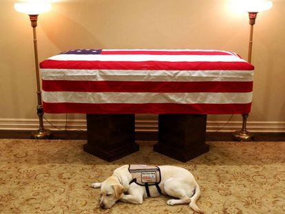'Sully', el perro guía del expresidente de EE UU George Bush padre, descansa frente a su ataúd este domingo en Houston.