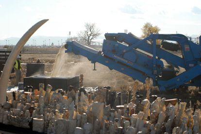 Estados Unidos destruye seis toneladas de marfil.