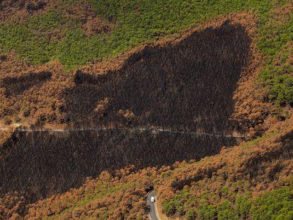 Vista de una zona quemada por el incendio forestal en la Sierra Bermeja, que afectó hace un mes a la localidades de Estepona, Genalguacil y Jubrique (Málaga), este jueves.