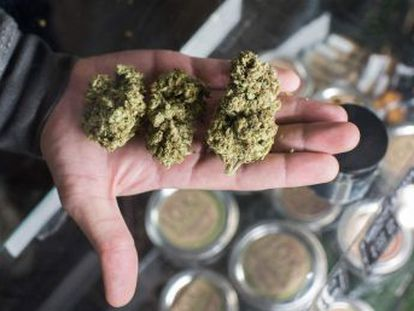 El comercio de cannabis para uso de ocio comienza el lunes en un estado con impacto global y 39 millones de habitantes