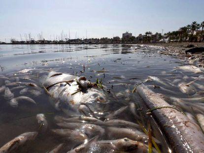 Peces muertos en una playa del mar Menor, en la zona de Villananitos y La Puntica, San Pedro del Pinatar (Murcia), el 13 de octubre.