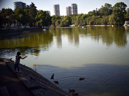 Una niña alimenta a unos patos en el parque Chapultepec de Ciudad de México, el pasado 24 de marzo.