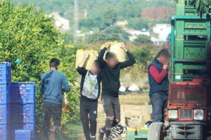 Algunas de las personas que eran explotadas en Onda (Castellón) trabajando en el campo.