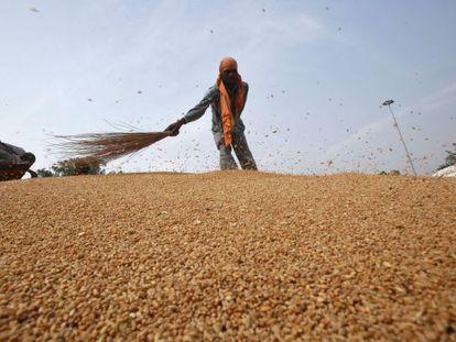 Limpieza de una cosecha de trigo en un mercado de grano en India.