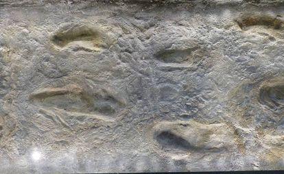 Huellas halladas en Laetoli.