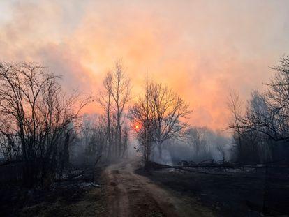 Las llamas han devorado el bosque en una parte de la zona de exclusión alrededor de la central de Chernóbil (Ucrania), este domingo.