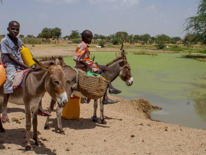 Dos niños dan de beber a sus burros en una charca sucia en Diffa, Níger.