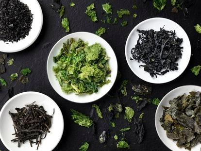 Máster en algas: desde hilos color azabache a polvos verdosos, aprende a diferenciarlas y a cocinar con ellas