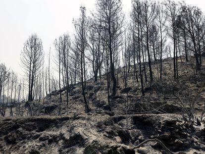 """El incendio forestal declarado a última hora del sábado en Azuébar afecta """"con carácter provisional y en una primera estimación"""" a cerca de 500 hectáreas de superficie."""