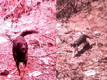 Animales captados por las cámaras de vigilancia de la Reserva en el Pedregal de San Ángel.