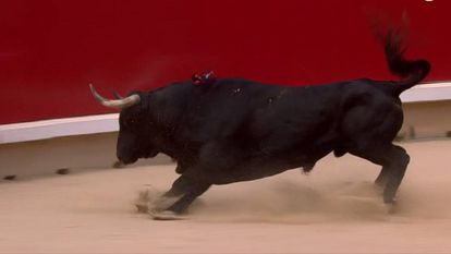 El toro 'Brujito', de La Palmosilla, el más encastado de la feria de San Fermín.