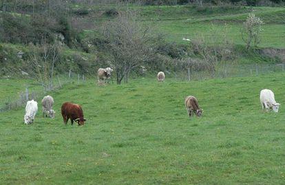 Un rebaño de vacas pasta en un prado