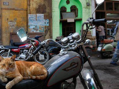 Un gato en una calle de El Cairo.