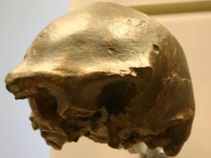 Uno de los cráneos de 'Homo erectus' encontrados en la isla de Java